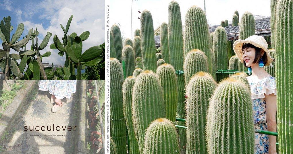 彰化田尾 ▎農村、生源巨大仙人掌,城市裡的綠色沙漠