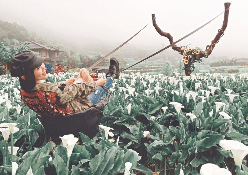 2020竹子湖花況:海芋、繡球花季、名陽匍休閒農莊交通