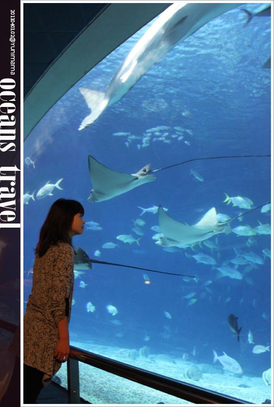 【夜宿海生館:墾丁】與海共舞:與魚共眠 [下]
